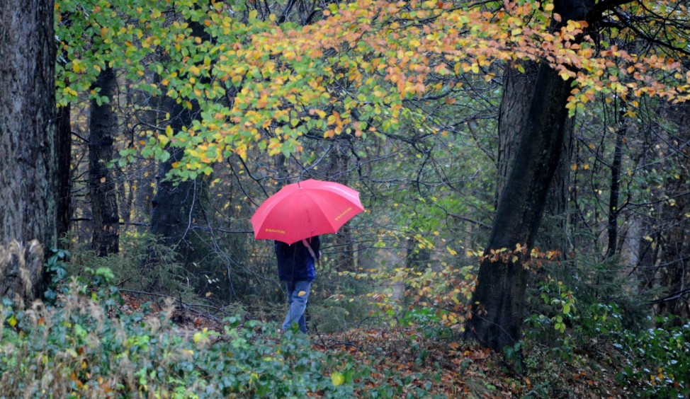 Regen im Herbstwald