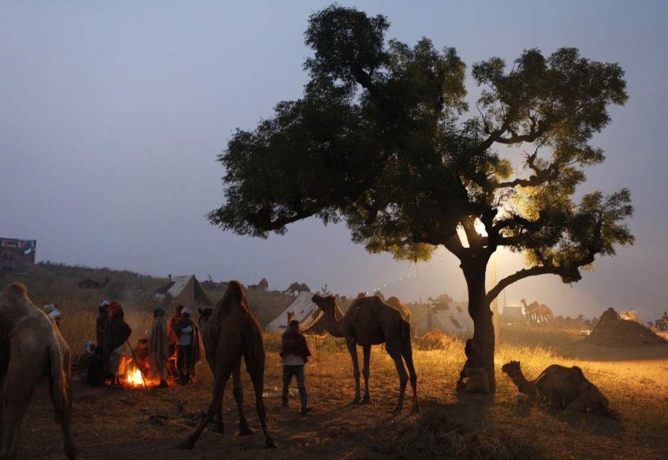 Camel traders warm themselves by a fire near a herd of camels early morning at the Pushkar Fair in Rajasthan