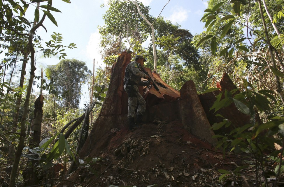 A police officer inspects a tree illegally felled in the Amazon rainforest in Jamanxim National Park near Novo Progresso