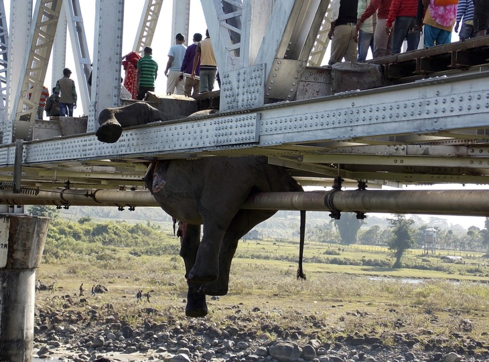 People walk past the hanging carcass of an elephant on a railway bridge in Khunia range in Jalpaiguri