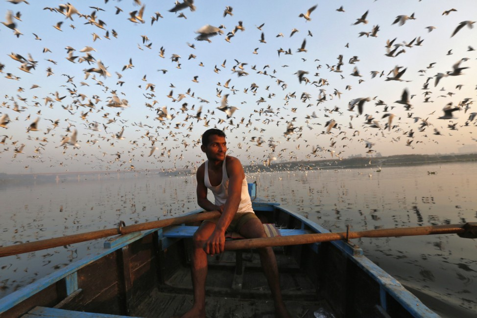 Migratory birds fly above a man rowing a boat in the waters of river Yamuna during early morning in old Delhi