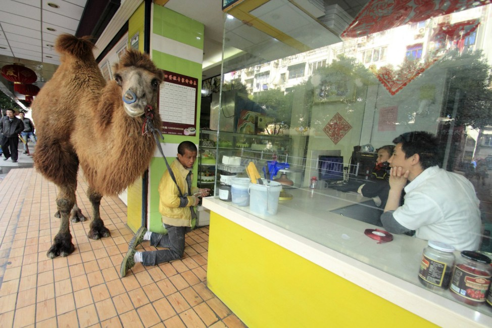 People look on as a beggar kneels in front of a store to beg for money with a camel, in Shaoxing