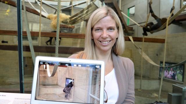 Stuttgarts Zoo lässt TV-Verhalten von Affen erforschen