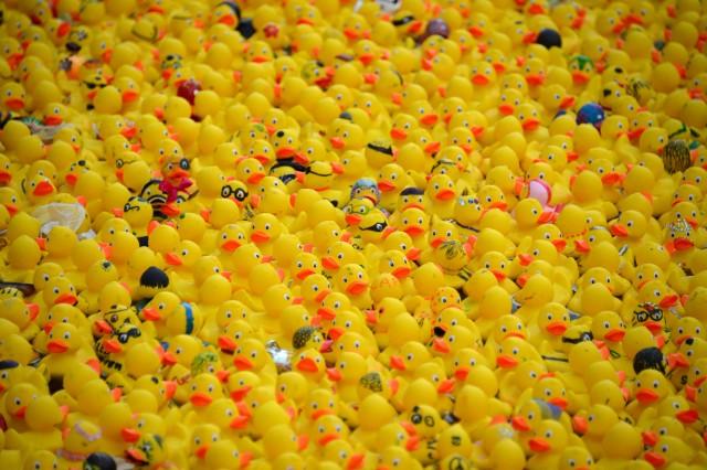 Entenrennen auf der Binnenalster