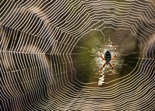 Dem Geheimnis der Spinnenfäden auf der Spur