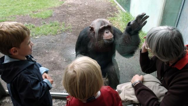 Besucher im Affenhaus desTierparks Hellabrunn