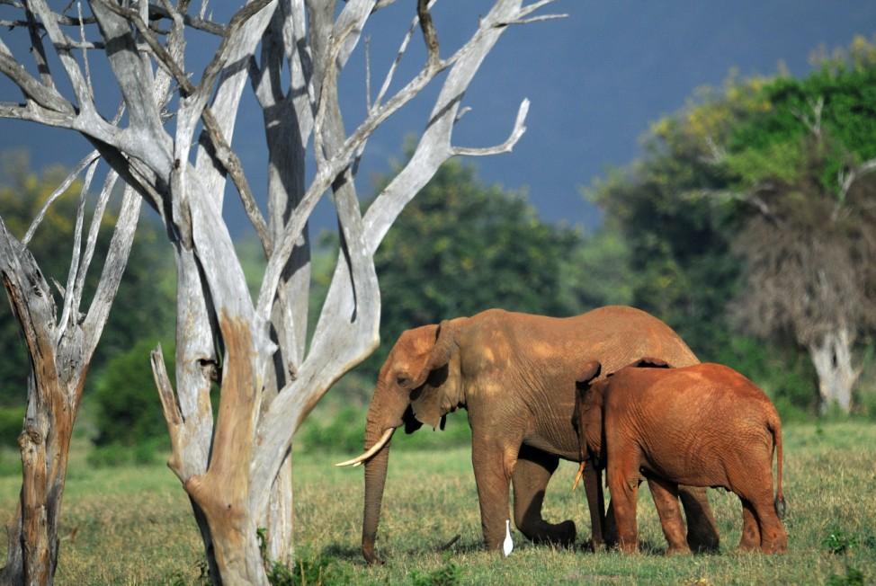 Elefanten Tsavo-East-Nationalpark Kenia Afrika