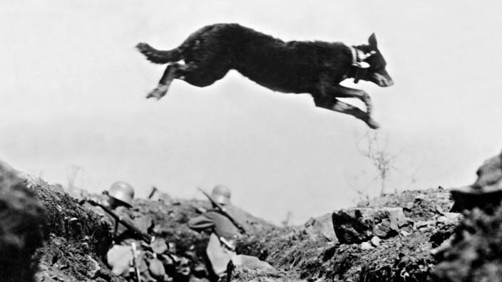 Meldehund im Ersten Weltkrieg im Einsatz, 1917