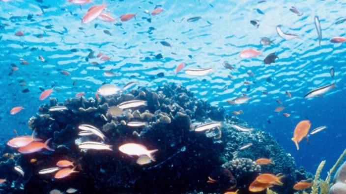 Great Barrier Reef: Great Barrier Reef vor der Küste Australiens