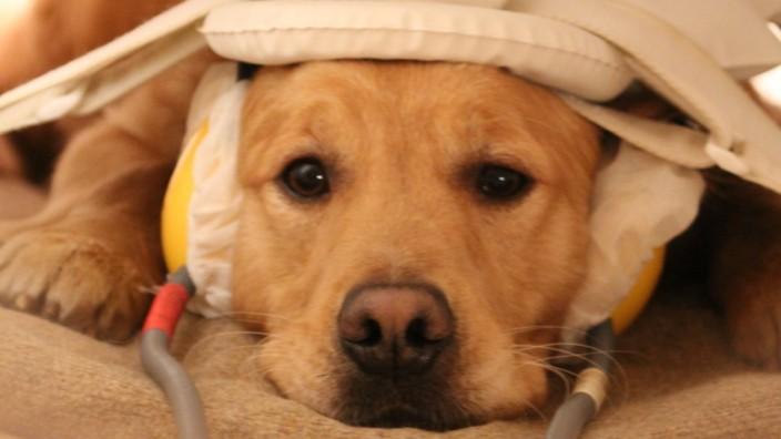 Hund im Scanner