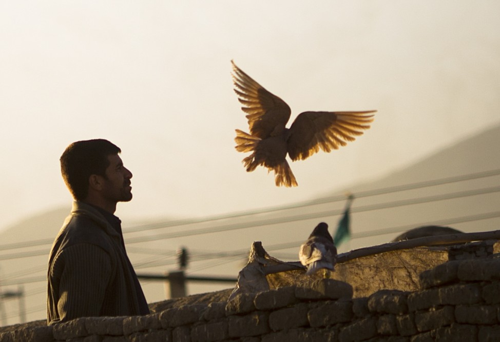 An Afghan man watches his pigeons after feeding them in Kabul, Afghanistan...
