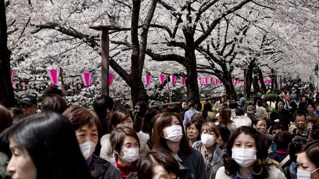 Japanese Enjoy Cherry Blossom Season