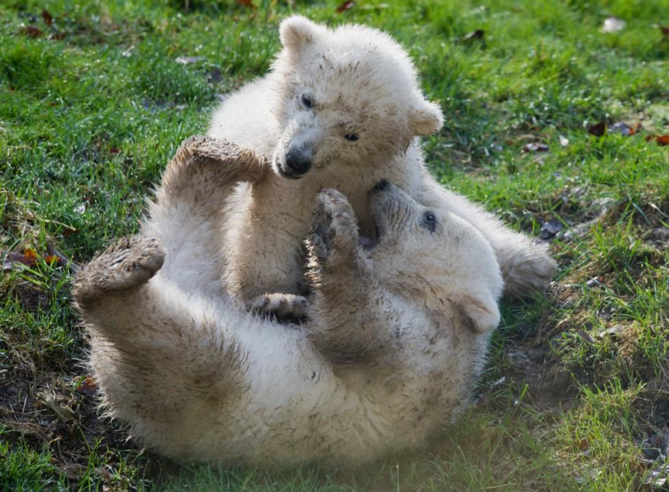 Taufe der Eisbärenzwillinge im Tierpark Hellabrunn.
