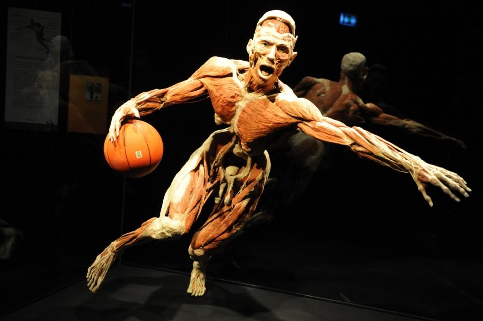 Motiv aus der Körperwelten-Ausstellung in der kleinen Olympiahalle in München.