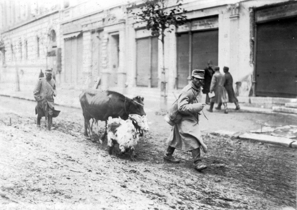 Österreichische Soldaten mit requiriertem Vieh, 1915