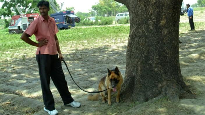 Vergewaltigung in Indien: An diesem Baum soll sich das Verbrechen ereignet haben