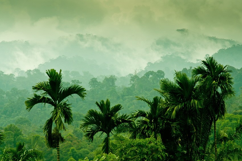 Tropischer Regenwald auf Sumatra