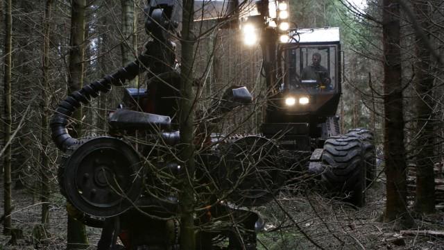 Baumfällen im Ebersberger Forst, 2006