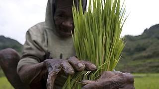 """Recht auf Ernährung: """"Die Weltbank hat - wie jeder - unterschätzt, wie wichtig es gewesen wäre, in die Landwirtschaft zu investieren"""", sagt Olivier De Schutter über die Ursachen der globalen Nahrungsmittelkrise."""