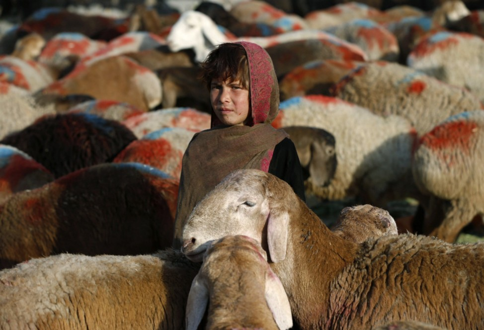 Afghan girl waits for customers at a livestock market in Kabul