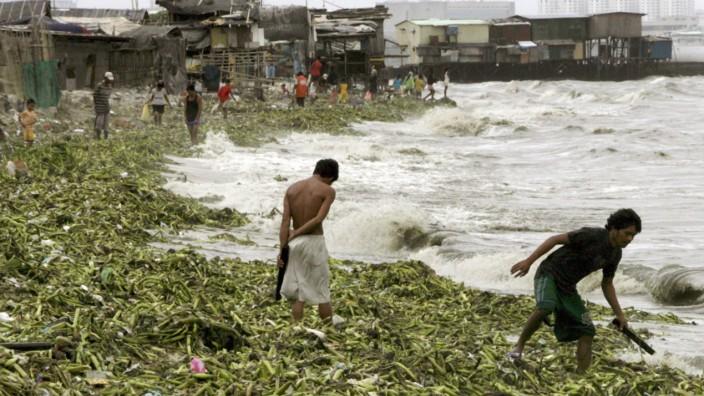 Taifun Sinlaku - Anwohner suchen nach Verwertbarem im angespülten Seegras