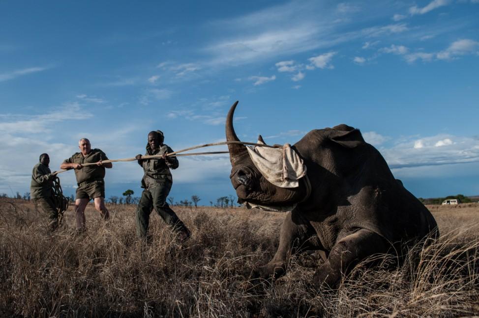 Südafrika Krüger Nationalpark Nashorn Parkranger