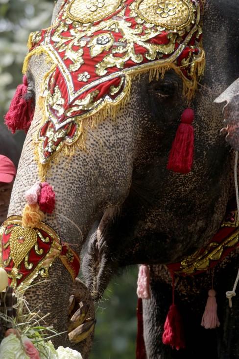 Elephant Mo Mo's 61st birthday celebrations in Yangon