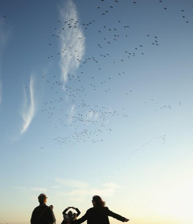 Cranes Make Annual Migration Across Europe