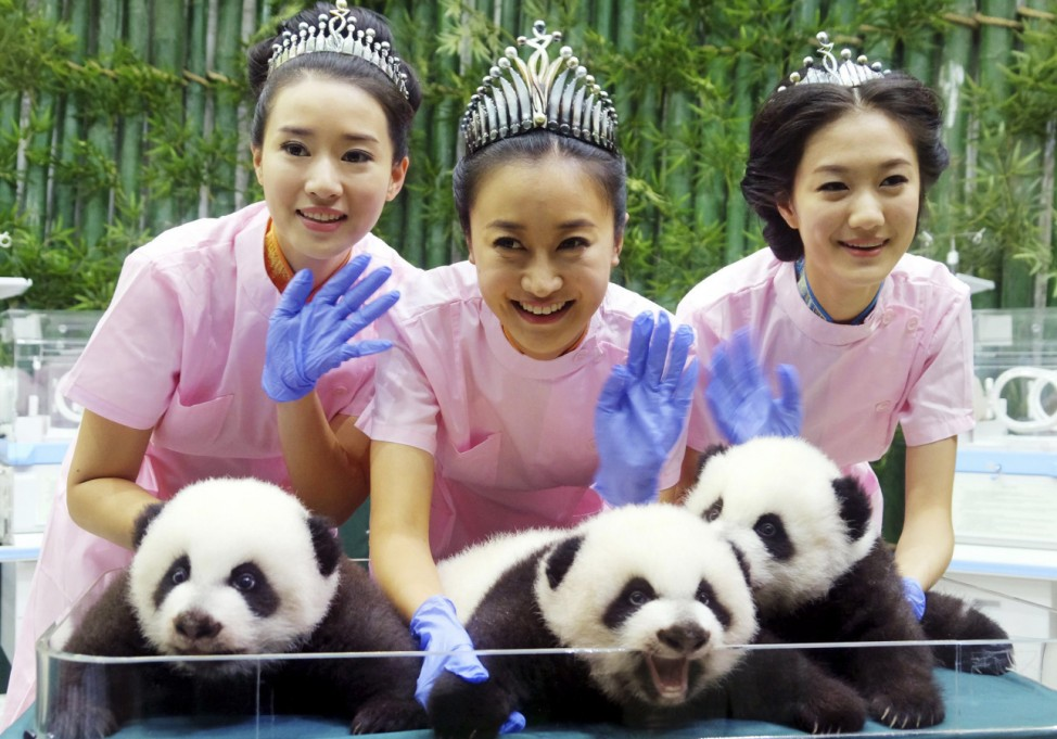 Miss Chinese winners He, Liu and Yang pose for pictures with Giant Panda triplets at the Chimelong Safari Park in Guangzhou