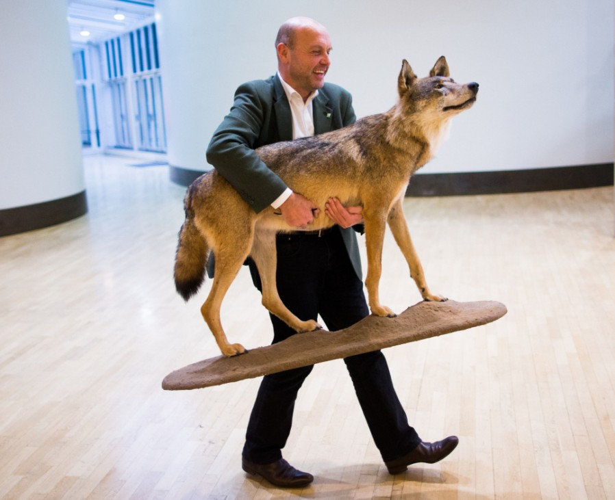 Der Wolf zurück in Deutschland