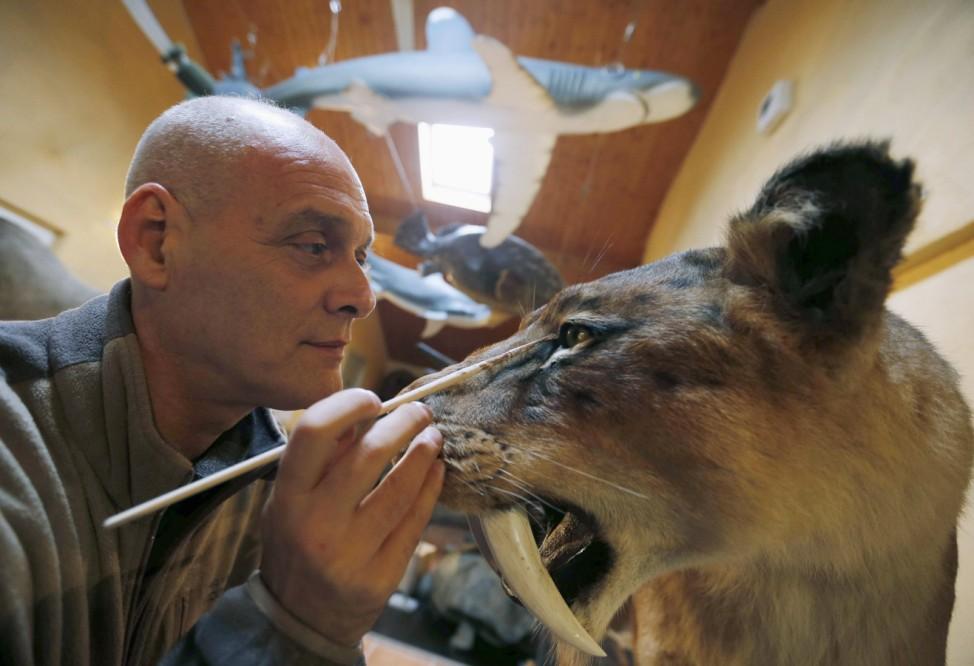 Belgian animal sculptor Emmanuel Janssens Casteels works on a replica of a Smilodon, an extinct genus of machairodont felid, in his workshop in Prayssas