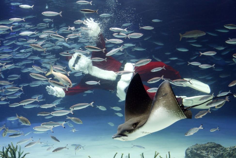 Diver dressed in Santa Claus costume swims with fish at Sunshine Aquarium in Tokyo