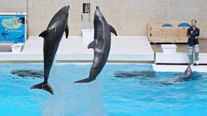 Delfinshow im Tiergarten Nürnberg