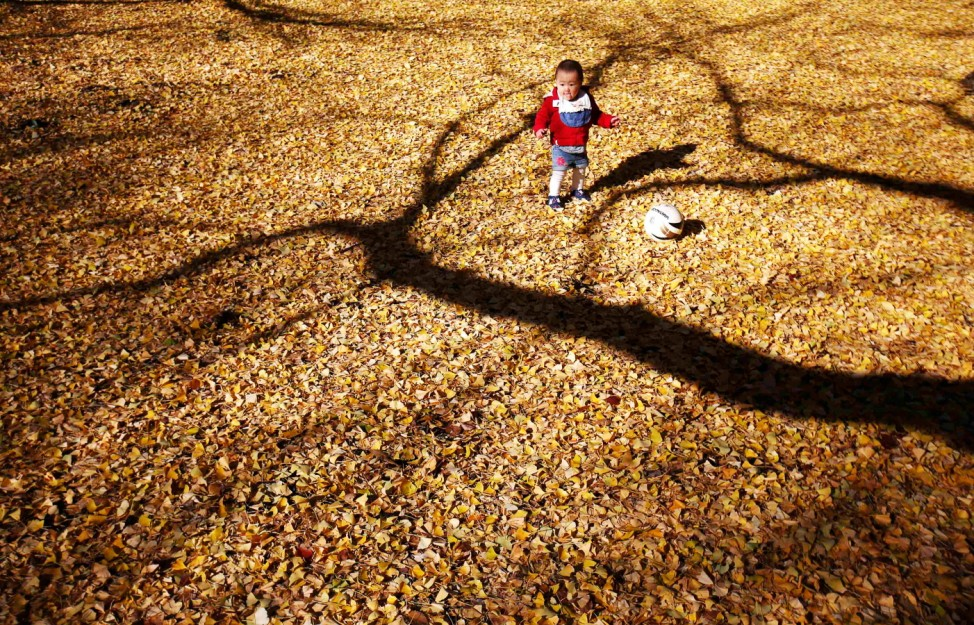 A child plays among ginkgo leaves at Yoyogi park in Tokyo