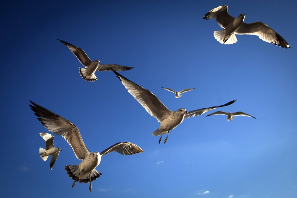 Birds are seen flying in Battery Park in the Manhattan borough of New York