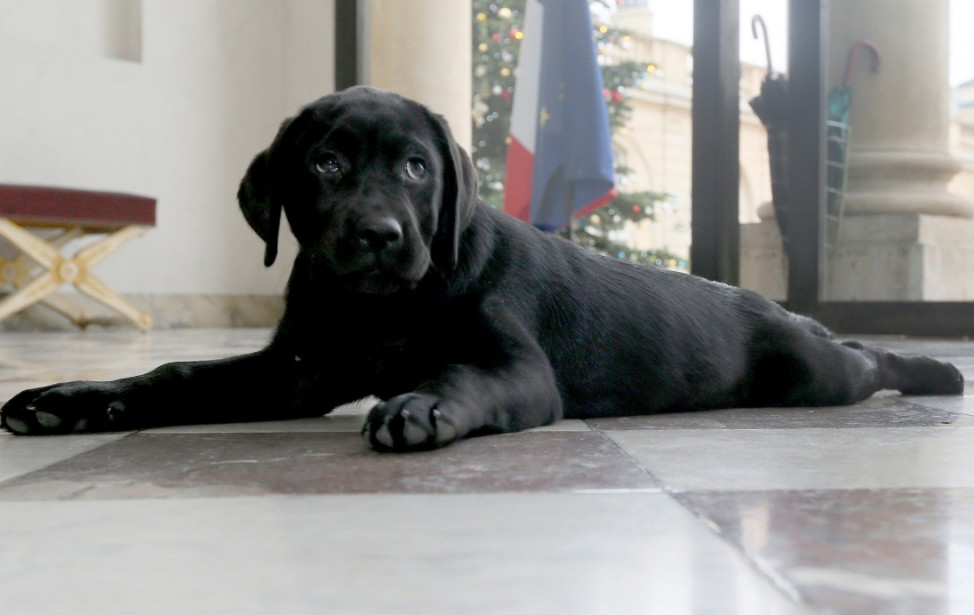Präsident Hollande hat einen 'First dog'