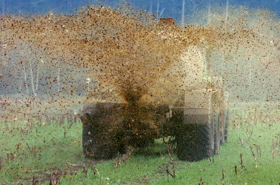 Gülle-'Regen' auf Maisfeld