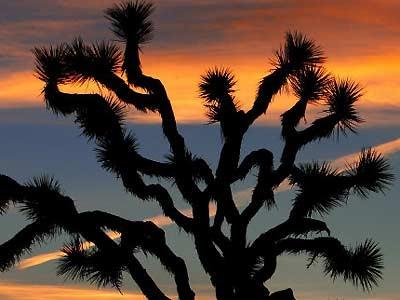 Sonnenuntergang in der Mojave-Wüste, Reuters