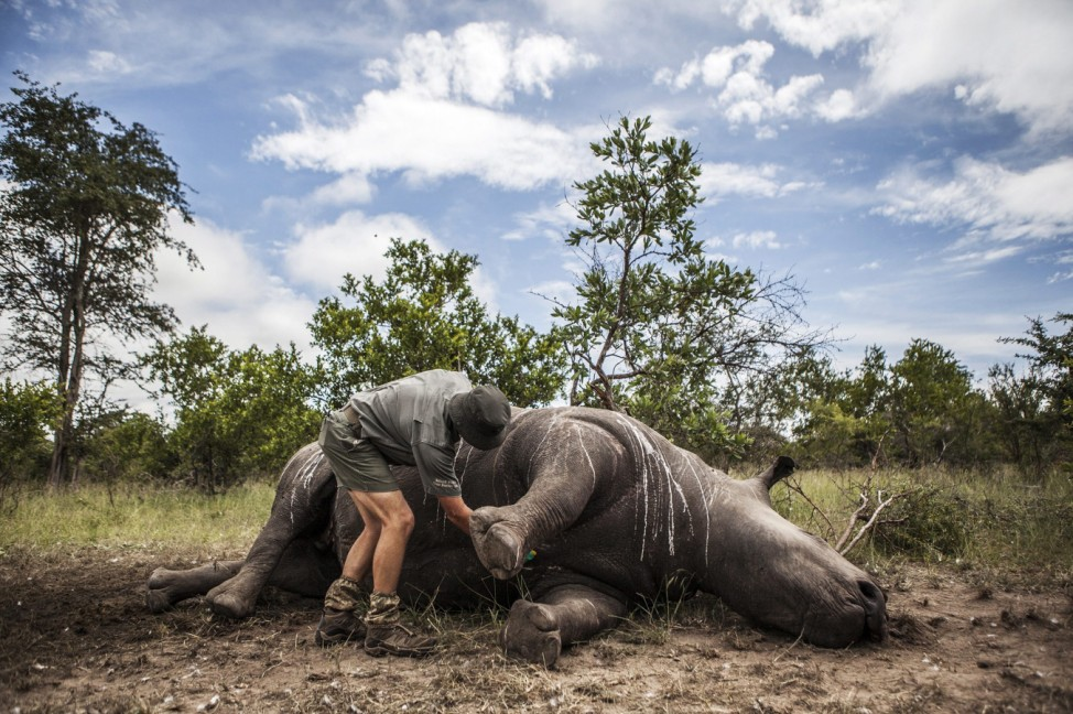 41 rhinos killed for horns in 2015