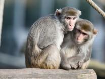 Tiere: Weitermachen um jeden Preis