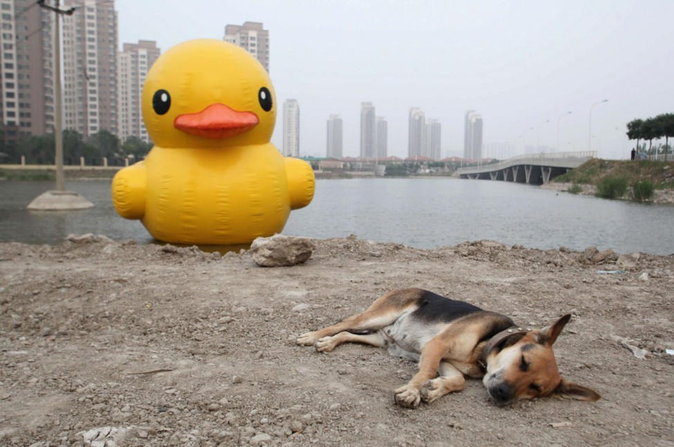 A dog lies on the ground in front of a scaled replica of the rubber duck by Dutch conceptual artist Hofman, in Tianjin municipality