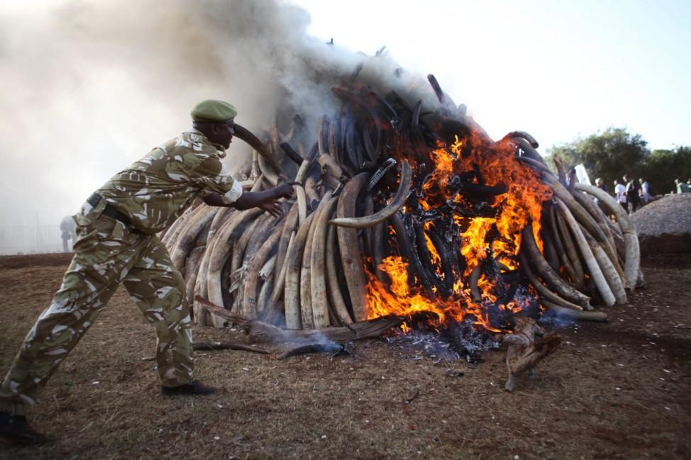 Kenya burns Ivory on World Wildlife day in Nairobi