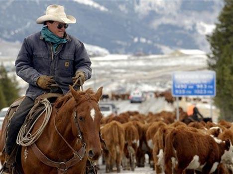 Leben und Arbeiten wie ein Cowboy, AP