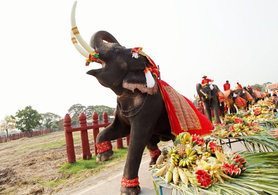 National Elephant Day celebration in Thailand