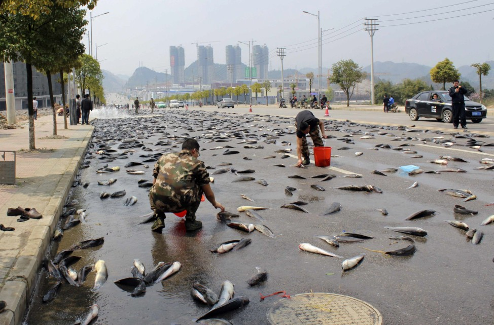 People pick up catfish which have fallen from a truck on a street in Kaili