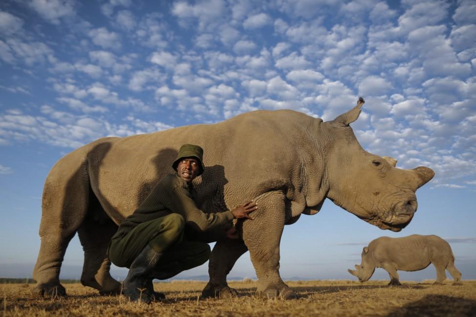 Facing extinction - Northern White Rhinoceros