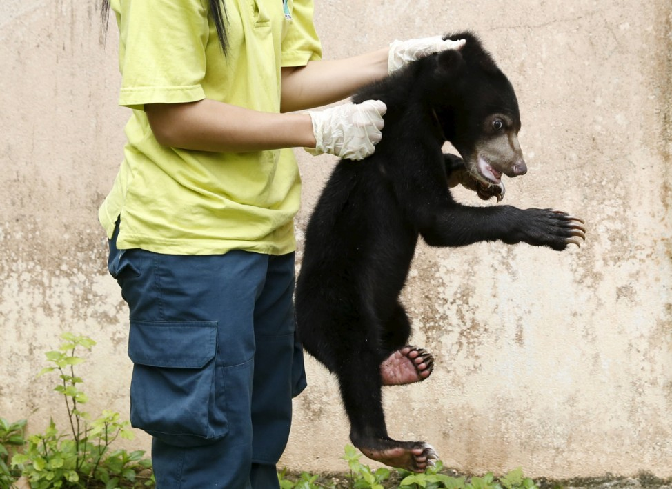 A wildlife department official holds a Malayan sun bear for the media at its head office in Kuala Lumpur