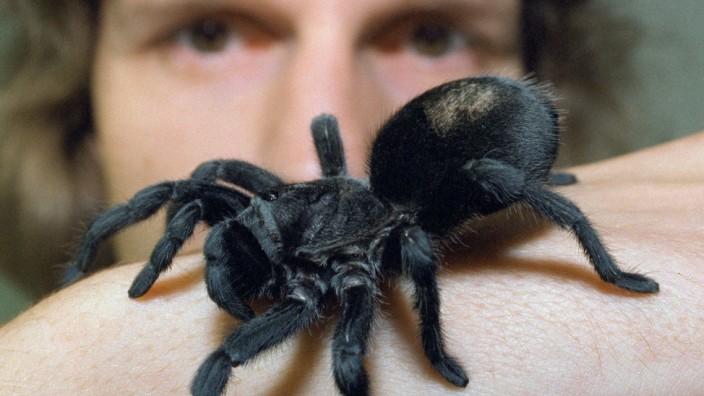 Spinnenforscher wegen Tierquälerei verurteilt