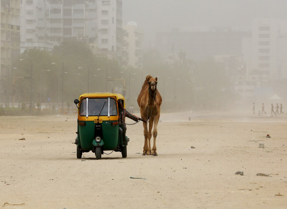 A man pulls his camel as he sits in an auto rickshaw during a dust storm in Ahmedabad