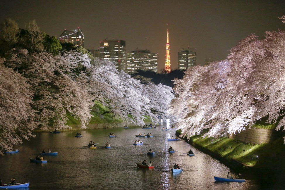 People enjoy viewing cheery blossoms in full bloom